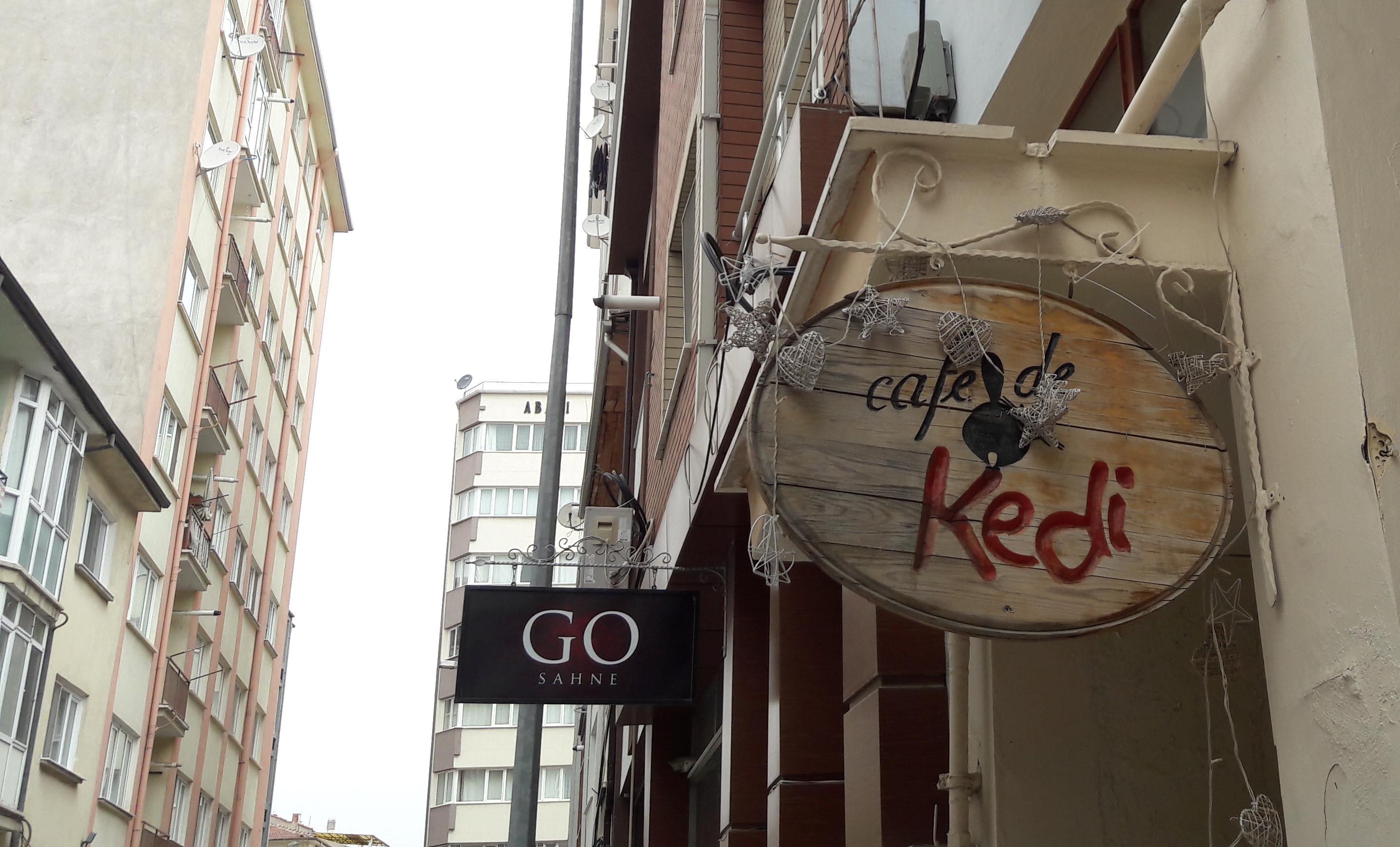 Begüm Kılıç Cafe De Kedi