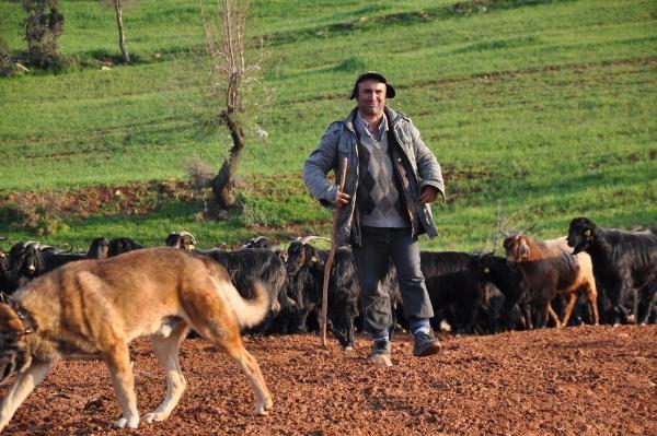 Çoban olmamak için okudu ama baba mesleğinden kurtulamadı