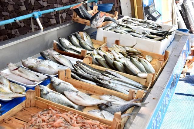 'Denizlerin prensi' olarak bilinen lüfer, kilosu 150 liradan tezgahlarda yerini aldı