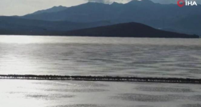 Antik Tibet geleneği: İki binden fazla koyun kışı geçirmek için donmuş gölü geçti