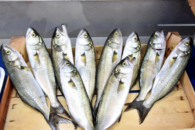Av yasağı sonrası balıklar tezgahlarda yerini aldı! Levrek150, çipura 60 liradan satılıyor
