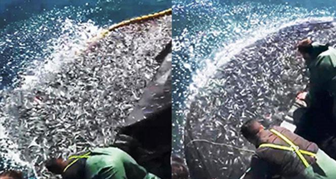 Balıkçılardan örnek hareket: Binlerce kefal yavrusunu denize bıraktılar