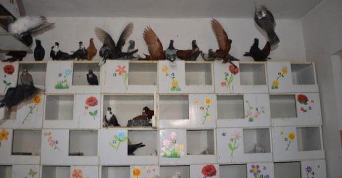 İşte Türkiye'nin ilk güvercin oteli