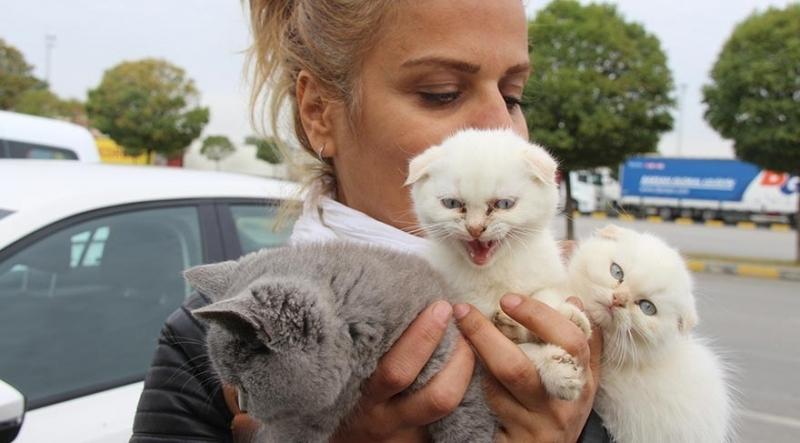 Kaçak kedi skandalı!