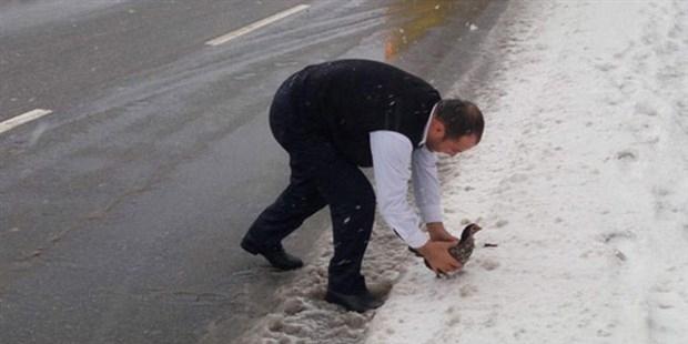 Karda mahsur kalan tavuğu İETT şoförü kurtardı