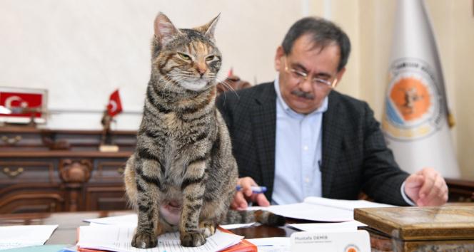 Makamda bir kedi: 'Mayıs'