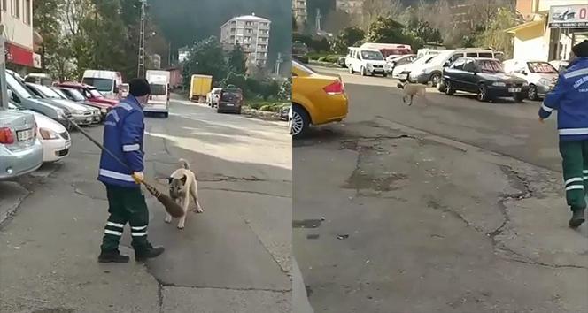 Rize'de temizlik görevlisi ile süpürgesini çalan köpek arasındaki kovalamaca cep telefonu kameralarına yansıdı