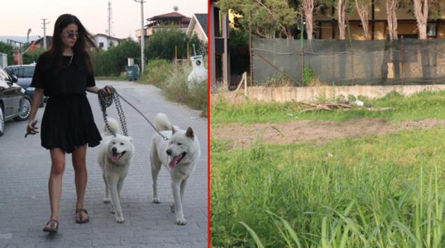 Sakarya'da vahşet! Köpekler, parçalara ayrılmış iki cansız beden buldu