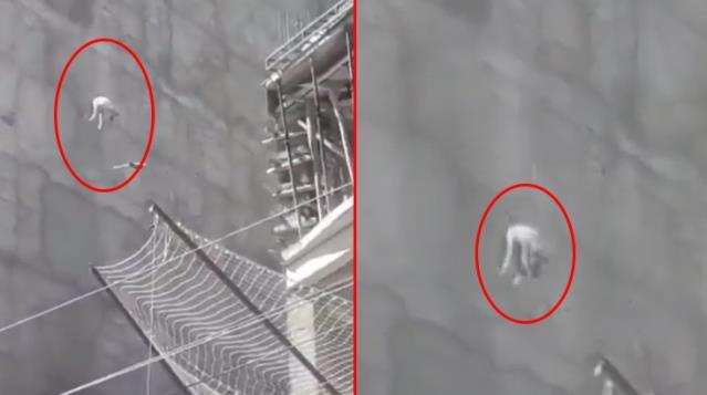 Şanlıurfa'da acı içinde havlayan köpeği 7'nci kattan aşağı attılar