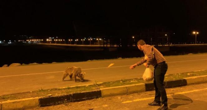 Yavru boz ayıları eliyle besledi