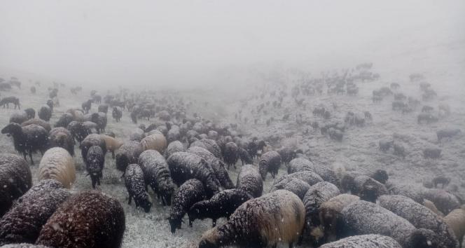 Yaylada sürü sahiplerine kar sürpriz