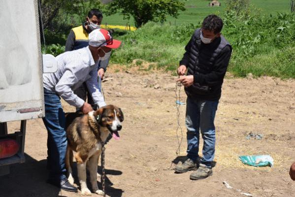 Kurt saldırısına karşı bakımevinden köpek sahipleniyorlar