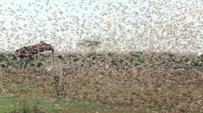 AFAD Başkanı Hamza Taşdelen Böcek İstilası Hakkında Uyarıda Bulundu