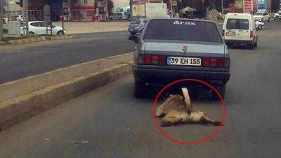 İşkenceci sürücü ve köpek bulundu!