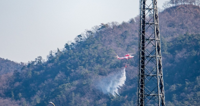 Japonya'daki orman yangını kontrol altına alındı