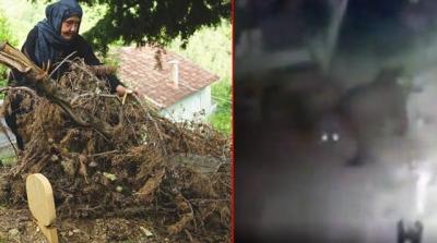 Kastamonu'da Ceset Yiyen Ayı Tekrardan Ortaya Çıktı