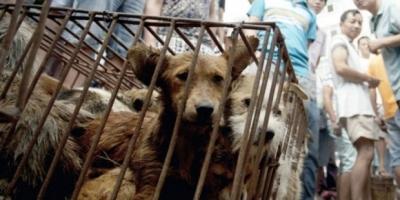 Köpek eti festivaline karşı 11 milyon imza
