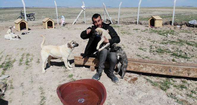 Köpekleriyle köyünden kovulan engelli genç, kendini 'Canlar'ına adadı