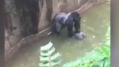 Öldürülen goril için açıklama: