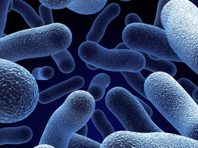 Tüm ilaçlara karşı dirençli bakteri korkuttu