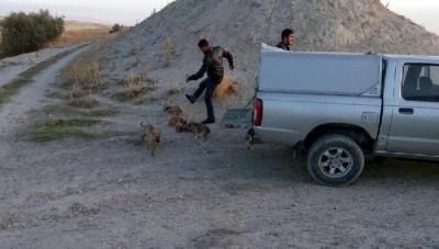 Ürgüp'te 'köpek tekmeleme' sosyal medyada tepki topladı