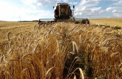 Van'da 2 bin 800 yıllık buğday ve susam bulundu!