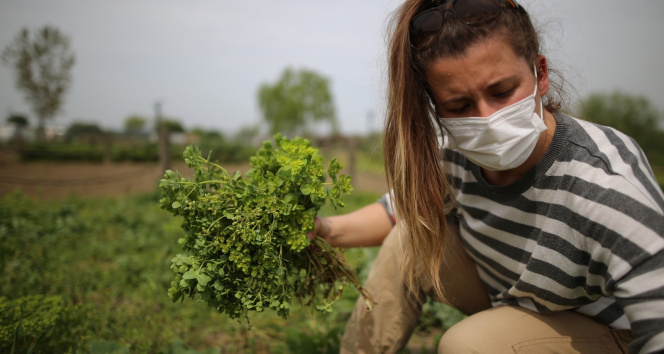 Yerel tohum ve ürünlere doğal ilaçlama